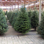 2019-pveb-tree-sale